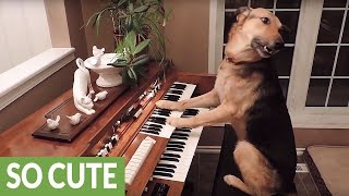 Download This compilation of smart dogs will leave you astonished! Video