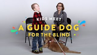 Download Kids Meet a Guide Dog for the Blind | Kids Meet | HiHo Video