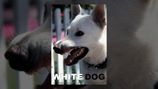 Download White Dog Video