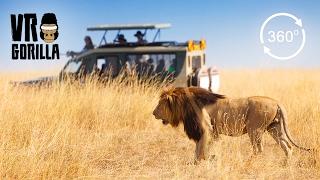 Download Guided Safari In Queen Elizabeth Park, Uganda (360 VR Video) Video