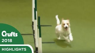 Download Olly Returns to Crufts! Jack Russell Goes Crazy Again at Crufts 2018 Video