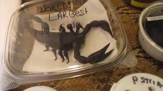 Download Reptile Expo 1 17 2016 Video