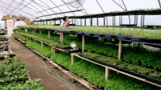 Download Organic Agriculture in the City of Toronto - Fresh City Farms Video