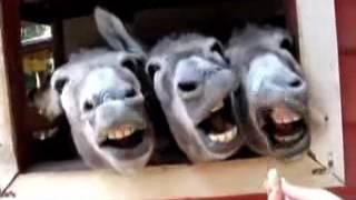 Download Top 10 des animaux les plus drole Video