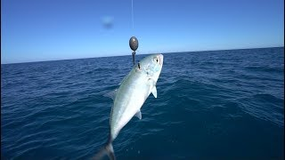 Download Deep Sea Fishing For Giant Mystery Fish Video