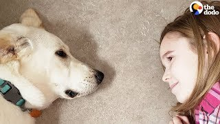 Download Little Girls Decide To Save A Shelter Dog's Life | The Dodo Video
