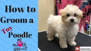 Download How to groom a Poodle puppy Video