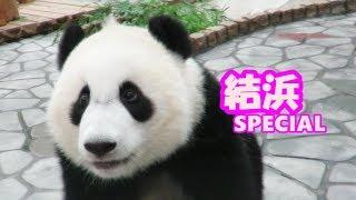 Download Yuihin Special ♪ 結浜スペシャル ♪ 何度も目の前に来てくれるかわいすぎる結浜をずっと楽しむ!! Video