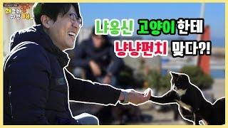Download 한국의 고양이섬 욕지도에서의 하루 Video