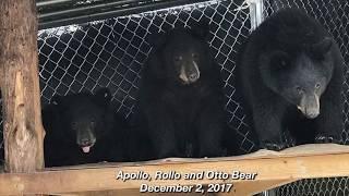 Download Otto, Rollo and Apollo:Time To Go Home- December 4, 2017 Video