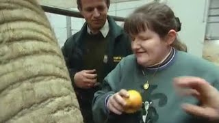 Download Up close with the Elephants | A dream come true | The Zoo Keepers | BBC Video