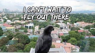 Download Training My Bird For Outdoor Free Flight | Vlog #273 Video