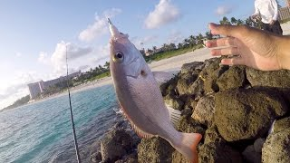 Download Saltwater Fishing gets me HYPED!!! Beach Fishing in the Bahamas Video