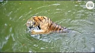 Download Seth swimming again Video