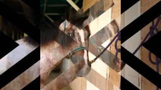 Download el caballo guason Video