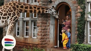 Download BREAKFAST with GIRAFFES!! and ELEPHANTS!! /// WEEK 118 : Kenya Video
