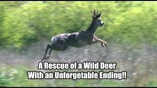 Download Amazing Rescue of a Deer with an Unforgettable Ending Video