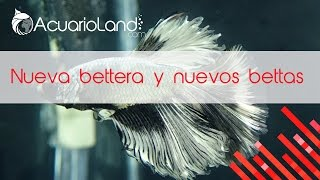 Download Nueva bettera y nuevos bettas || ACUARIOLAND Video