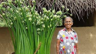 Download Village Food ❤ Spring Onion flower Recipe by Grandma | Village Life Video