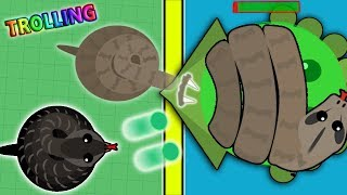 Download MOPE.IO NEW COBRA SNAKE / BOA CONSTRICTOR TROLLING! FUNNY & BEST MOMENTS! (Mope.io) Video