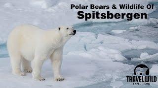 Download Polar Bears and Wildlife of Spitsbergen Svalbard Video