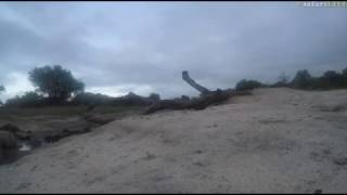 Download Jan 22, 2017- Sunrise- Marvin and Ronald At Djuma Dam with James Hendry Video