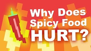 Download Why Does Spicy Food Burn Your Mouth? Video