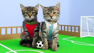 Download Twin Kittens Play Football. Cute RIVALS match. Fun Cat Game DIY Video