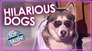 Download FUNNIEST DOG AUDITIONS & MOMENTS EVER on Britain's Got Talent | Top Talent Video