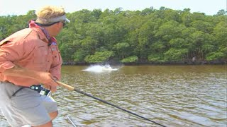 Download Monster Tarpon Fish on Plugs in Florida Everglades National Park Video