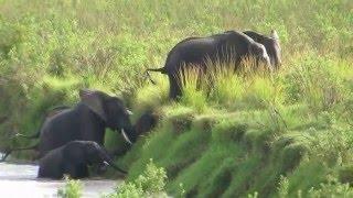 Download Elephants running away Video