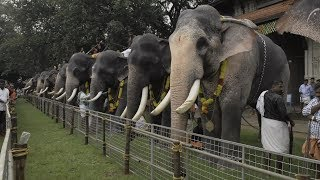 Download Assignment Asia: Elephants of Kerala Video
