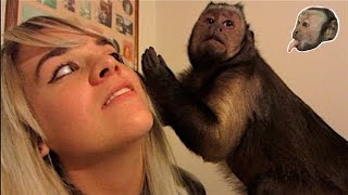 Download Capuchin Monkey, Pit Bulls and Family Visit! Video