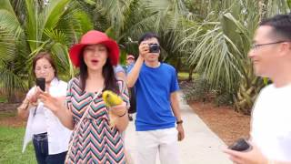 Download Family Tour Tropical Fruits Farm in Florida Video