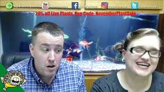 Download Planted Aquarium Questions. Easy Aquarium Plants Live Stream. Video