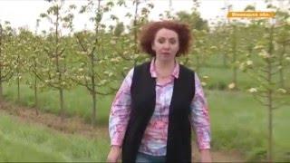 Download Видео новости В Винницкой области вымирающее село спас ягодный бизнес «Факты» Video