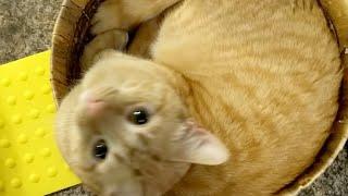 Download Kitten Close Up 2017-12-02 Video