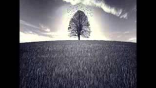 Download Theo Travis & Robert Fripp - The Silence Beneath / The Unspoken / Pastorale (Thread) Video