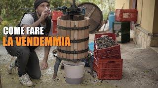 Download COME FARE la VENDEMMIA Video
