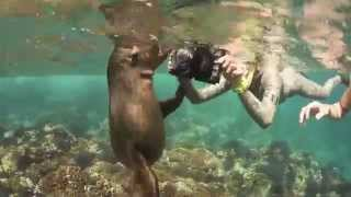 Download What happens when a bunch of freedivers meet curious sea lion pups for the first time? Video