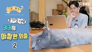 Download 고양이를 부탁해 - 호기심대왕 키키의 아찔한 외출 #002 Video