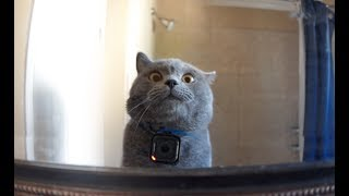 Download GoPro on a Cat Left Home Alone Video