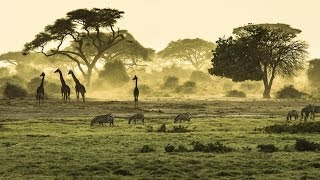 Download Safari in East Africa - Kenya and Tanzania Video