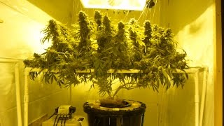 Download Watering Cannabis Explained Video