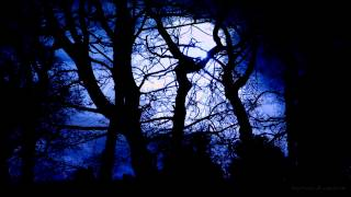 Download Forest at Night Sounds | Owls & Crickets | Rustling leaves and wind Video