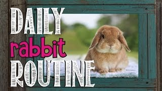 Download Daily Rabbit Routine Video