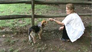 Download Realtor Lisa Patton Shows You How to Dog-Proof Your Fence Video