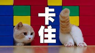 Download 【喵來啦】你再給我說一遍貓是液體??? Video