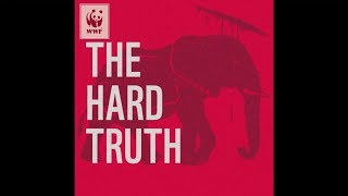 Download The Hard Truth - WWF and the Public Support an End to the Ivory Trade Video