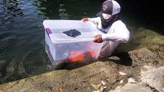 Download Plastic Bin Fish Trap Catches BIG FISH! DIY | Monster Mike Fishing Video